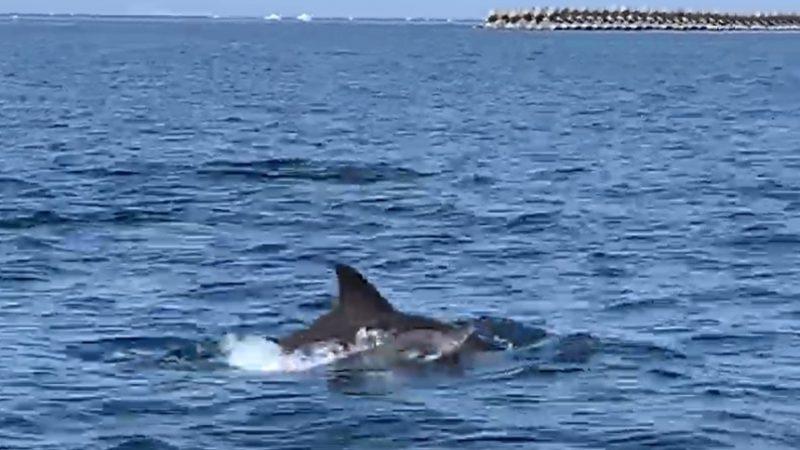 錦江湾でイルカに遊ばれる(笑)